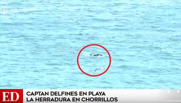 En el decimotercero día del estado de emergencia y aislamiento social obligatorio se avistaron delfines en playa de la Costa Verde. (Foto captura: América Noticias)