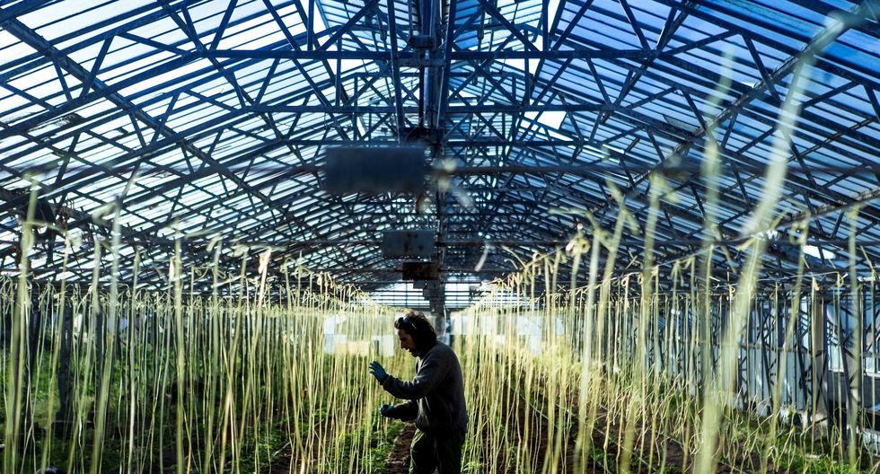 El gobierno anunció que se destinarán 236 millones de euros a los ayuntamientos de siete regiones para ayudarlos a contratar personal agrario. . (Foto: EFE)