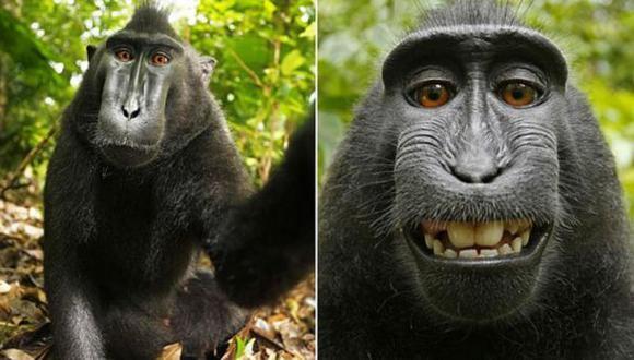 Fin del debate: El selfie del mono es de dominio público
