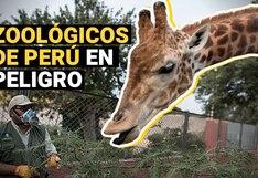 Parque de Las Leyendas y Zoológico de Huachipa en peligro ante la falta de visitas