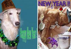 ¿Listo para tomar nota de la resoluciones de Año Nuevo para tu mascota?