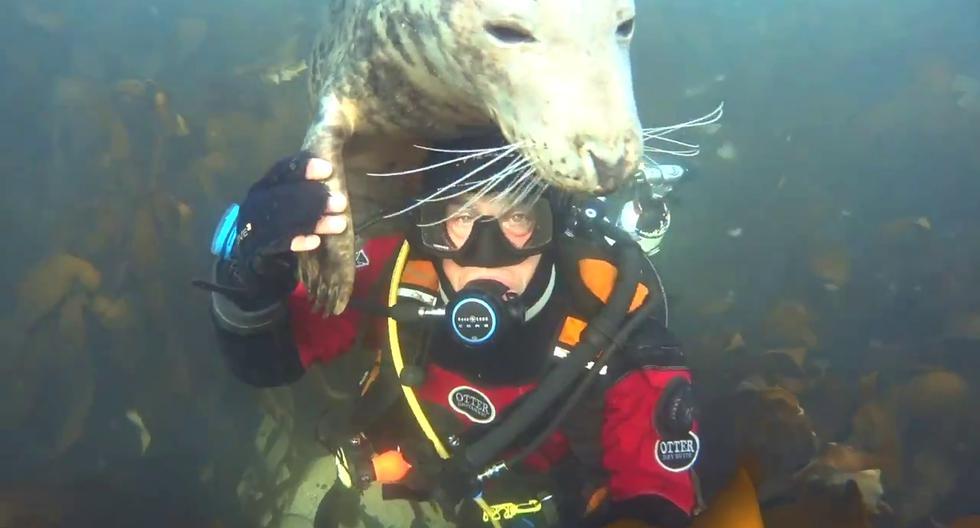 La singular escena tuvo lugar en las aguas de las Islas Farne, Inglaterra. (Foto: @Sealdiver | Twitter)