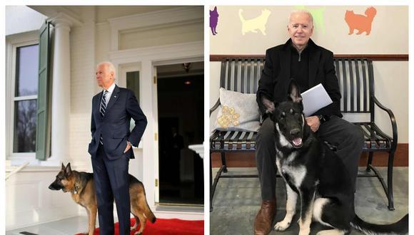 Champ y Major, los dos pastores alemanes que vivirán con la nueva familia presidencial en la Casa Blanca. (Foto: Twitter)