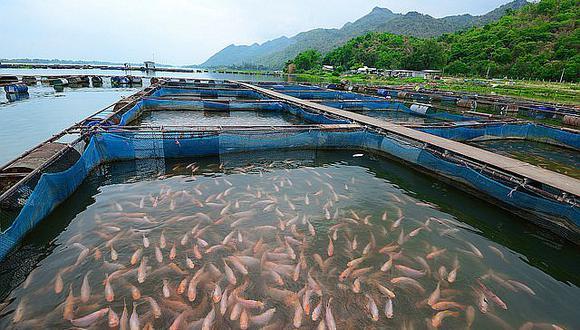 Empresas del sector esperan que se restituya los mecanismos de promoción a la acuicultura. (Foto: Difusión)