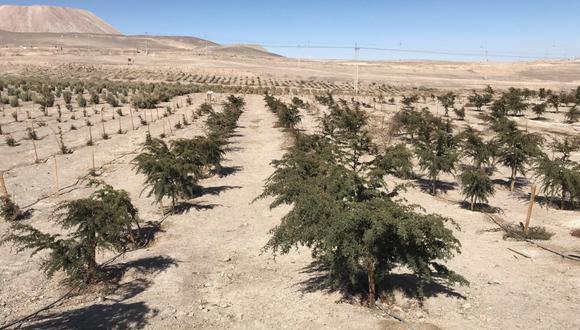 La iniciativa busca frenar el avance del cambio climático en Chile por medio de un cultivo sostenible que sirva como modelo a las industrias locales. (Foto: @mpaneque en Twitter)