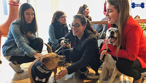 Pepa y Bella haciendo de las suyas para demostrar que la adopción puede ser una excelente alternativa cuando quieres un perro.