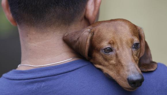 Denuncian matanza de perros a flechazos en Nicaragua