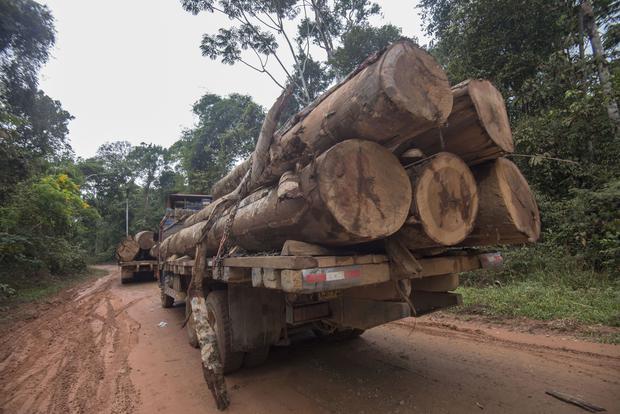 Abajo: Camión cargando shihuahuacos en carretera, sin puestos de control, de Lucerna a Alegría. (Foto: Flor Ruiz)