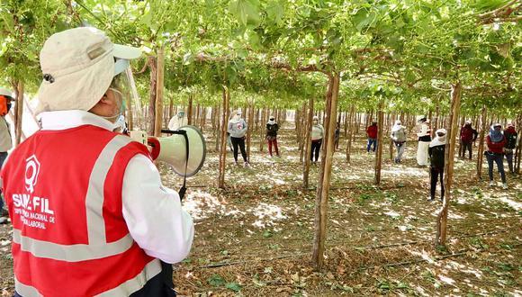 De 30.204 trabajadores formalizados en la región Ica, el 92,5% labora en el sector agroexportador, indicó la Sunafil. (Foto: GEC)