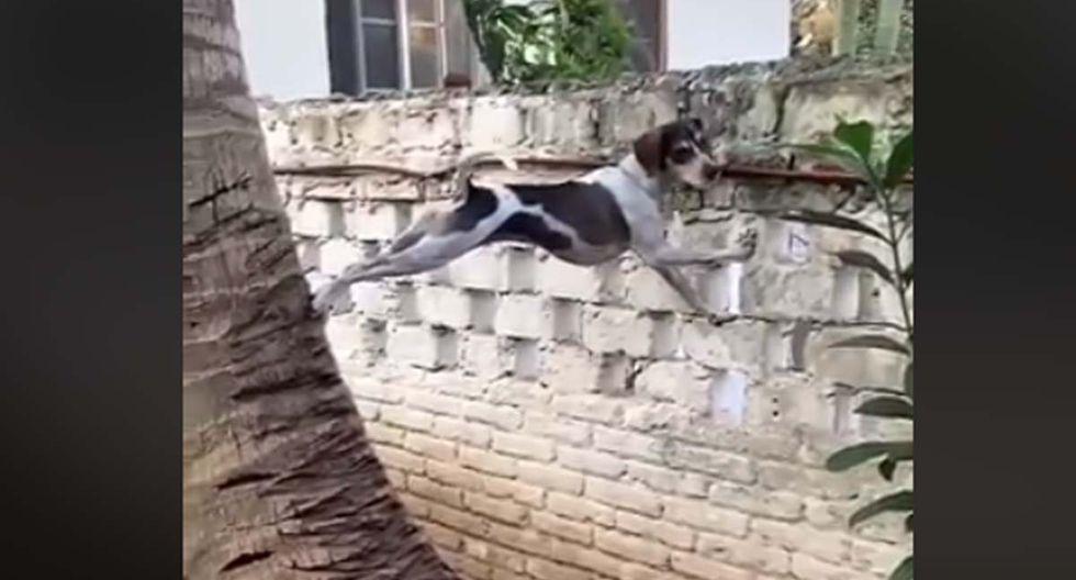 El can escuchó que sus vecinos estaban peleando.| Foto: Facebook/Conexión Informativa
