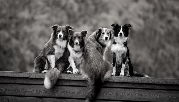 Perros demostraron que su lealtad no está supeditada solo a los humanos sino a todos los animales con los que sienten afinidad. (Foto: Pixabay/Referencial)
