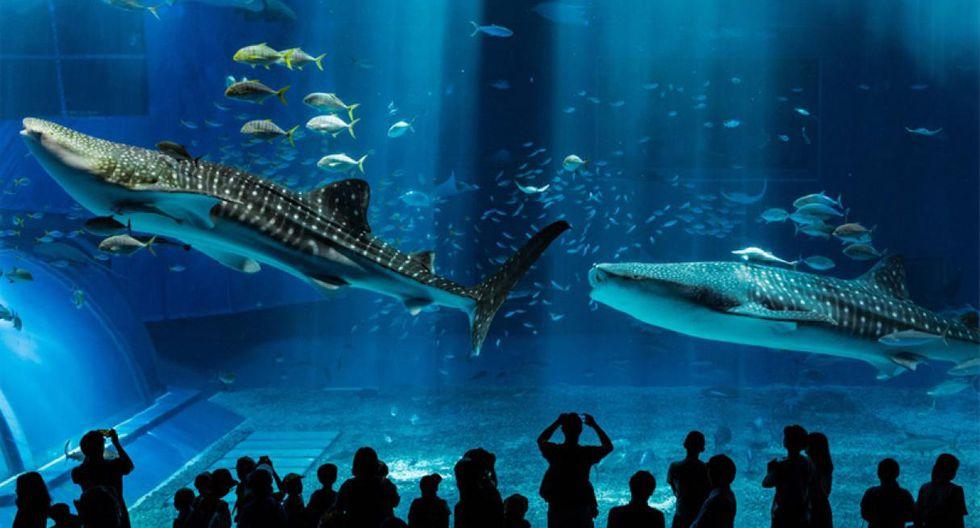 El acuario de Mall Aventura Santa Anita se convertirá en el segundo más grande del Perú. (Foto: Difusión)