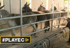 La alternativa en Chile para intolerantes a la lactosa