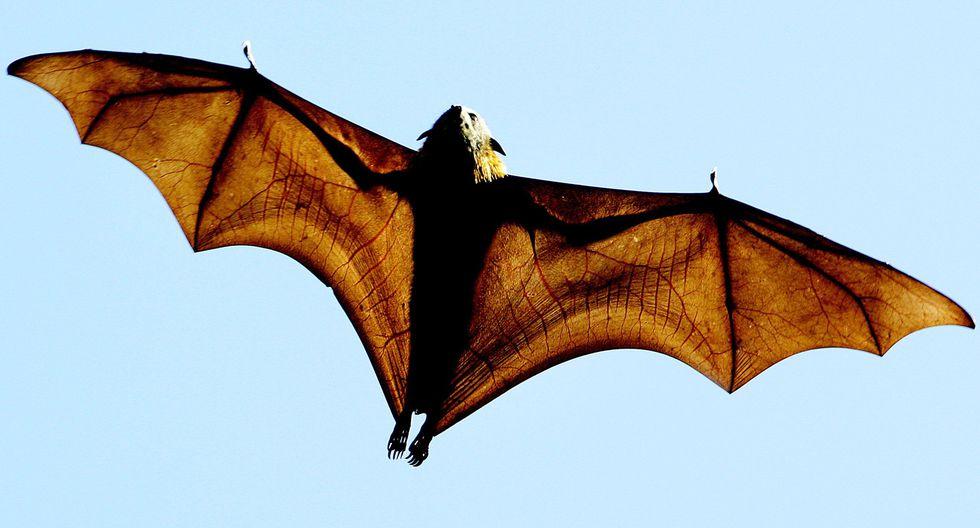 Coronavirus: La sopa de murciélago que culpan de desatar el estallido de contagios en Wuhan. Foto: AFP