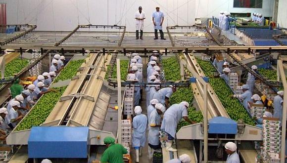 Exportaciones de cítricos crecieron 85,3% en primer trimestre