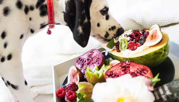Es importante saber qué frutas son buenas y seguras para ser consumidas por tu perro. (Foto: Rarnie McCudden / Pexels)