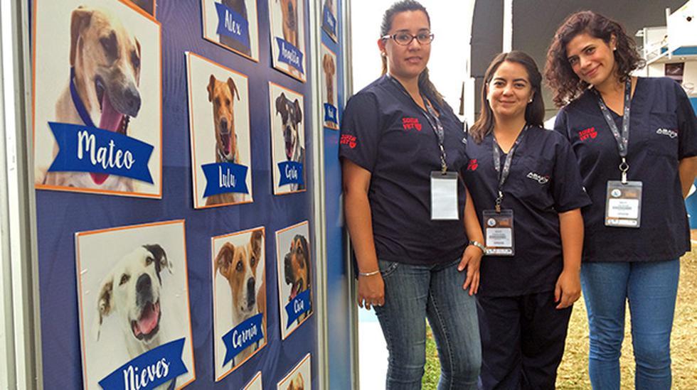 Suiza Vet y ABAXIS apuestan por perros sin hogar - 1