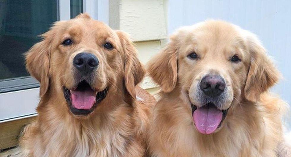 Cooper y Murphy fueron criados como hermanos y no dudan en demostrarse cariño y protección. (Foto: Instagram @themgoldenboys)