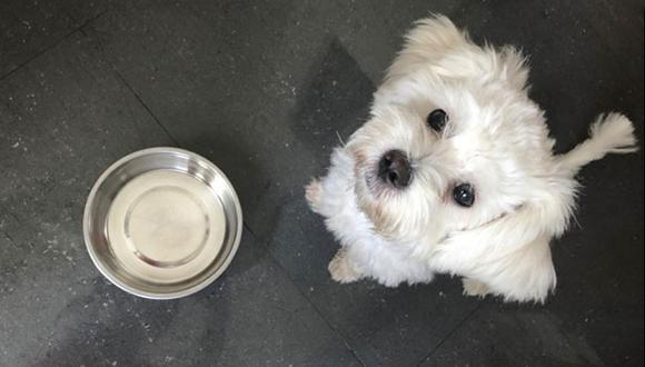 Si crees que terminarás en una situación similar, no te estreses, en esta nota encontrarás varias alternativas para alimentar a tu mascota. (Foto: Andrea Carrión)