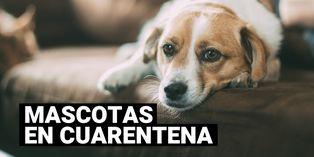Consejos para pasear, entretener y cuidar a tu mascota en cuarentena