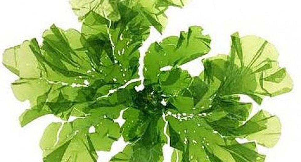 Las algas pueden ser claves para que el planeta pueda prosperar de manera sostenible.