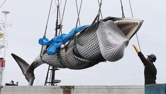 Yoshifumi Kai, presidente de una asociación de pescadores de ballenas, celebró poder pescar una. (Foto: EFE)