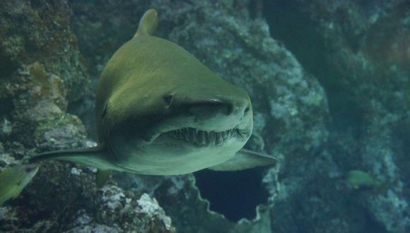 En Facebook se hizo viral el tremendo ataque de un tiburón a un cardumen que se encontraba tranquilamente alimentándose en el mar de Florida, Estados Unidos. | Pixabay