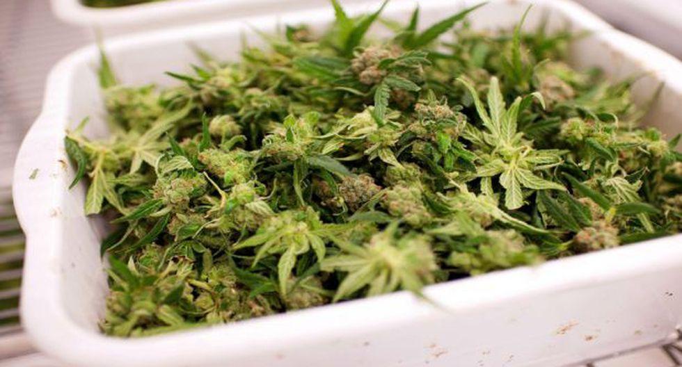Silicon Valley: Inversores analizan el negocio de la marihuana