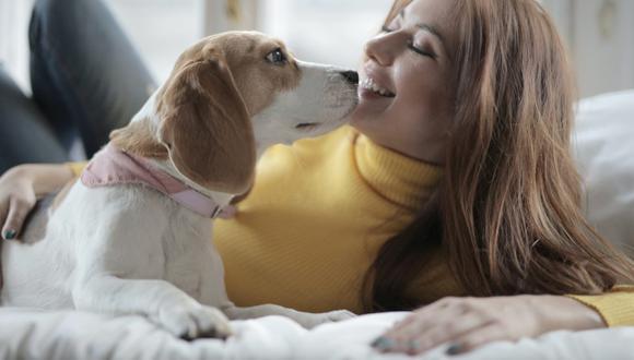 Los perros disfrutan de echarse en la cama con sus amos o verlos mientras duermen. (Foto: Andrea Piacquadio / Pexels)