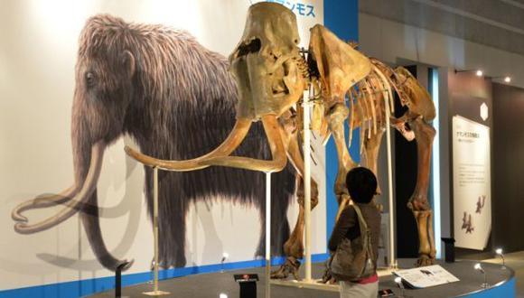 Estudio da nuevas pistas sobre la extinción de los mamuts