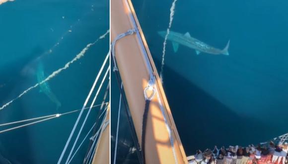Graban a un tiburón gigante que se parece a un megalodón. (Foto: @.alex.albrecht / TikTok)
