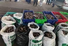 Piura: intervienen embarcación que realizaba pesca ilegal en el mar de Talara