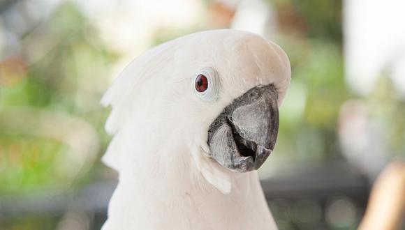 Se desconoce el motivo que llevó a las aves a movilizarse de una manera masiva. (Foto referencial - Pexels)