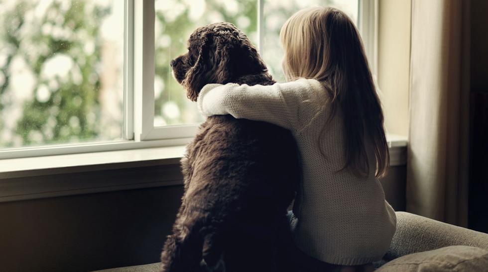 Amigo fiel: cómo elegir el perro perfecto para tus hijos - 2