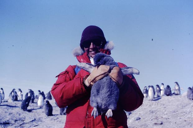 Ex viceministra de Pesquería Patricia Majluf –en la foto, carga a una cría de pingüino emperador– se convirtió en la primera peruana en bucear en la Antártida, en 1983, como parte de la expedición estadounidense del Dr. GL. Kooyman. (Foto: Archivo Personal)