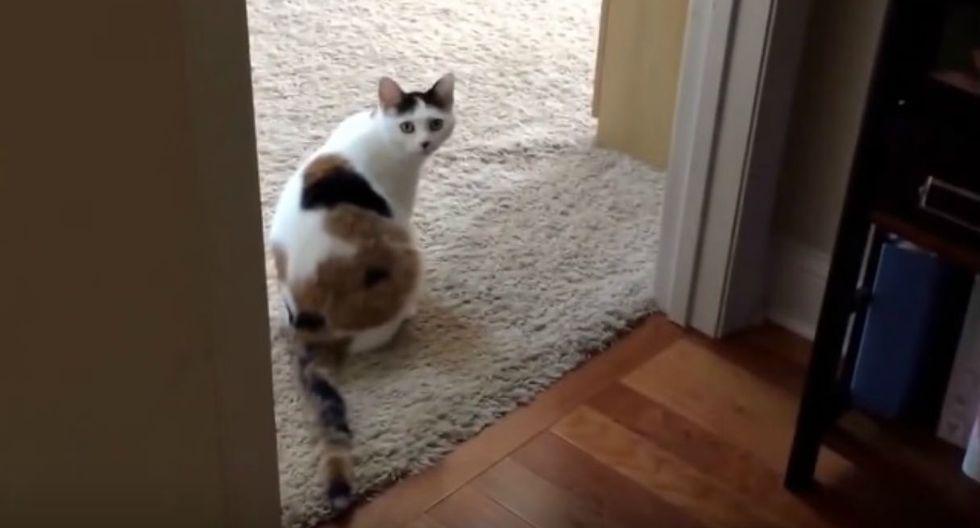 Se viralizó en YouTube la curiosa escena protagonizada por un perro y un gato que 'discuten' para quedarse con una cama. (Foto: Captura)