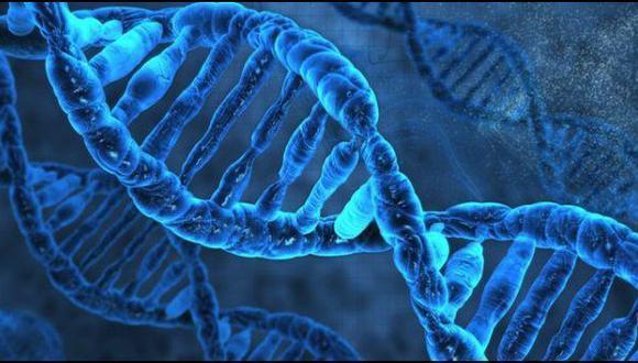 No todas las mutaciones genéticas son malas   TECNOLOGIA   EL COMERCIO PERÚ