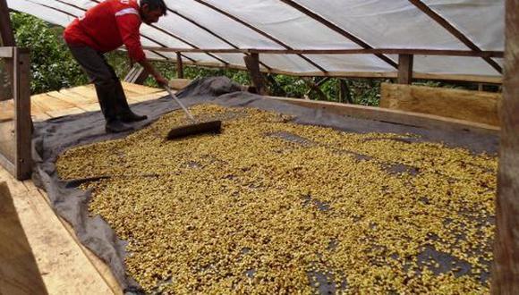 Consumo de cacao y café será impulsado en Expo Tocache. (Foto: Andina)