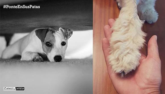 A través de la campaña #PonteEnSusPatas, el médico veterinario Pancho Cavero espera que las personas sientan empatía por el sufrimiento de los animales por la pirotecnia.