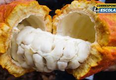 El cacao y castaña como fuentes de emprendimiento