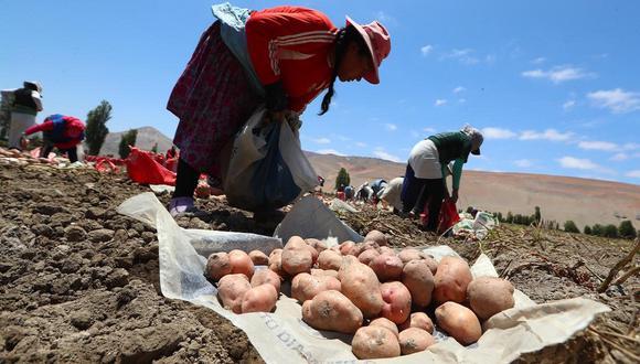 Desde 1969, cada 24 de junio se celebra a los campesinos y campesinas del Perú. (Foto: GEC)