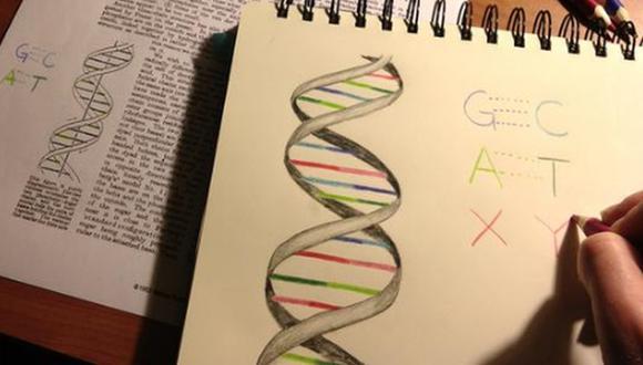 Desarrollan una bacteria con ADN de seis letras