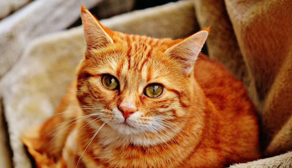 Los cibernautas quedaron impactados con el accionar del gato. (Pixabay / Alexas_Fotos)