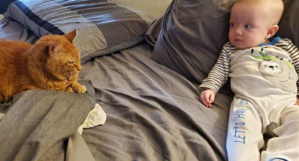 Sunny es un minino que pasó la mitad de su vida en un refugio. Todo cambió cuando conoció a los Richardson. (Foto: The Dodo)