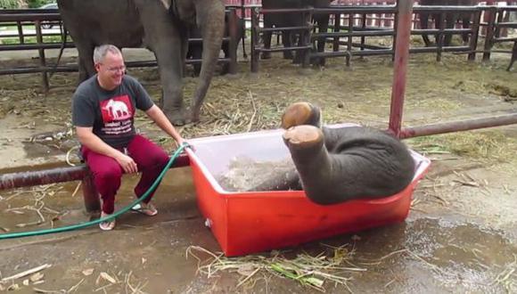YouTube: torpe elefante bebe te robará el corazón (VIDEO)