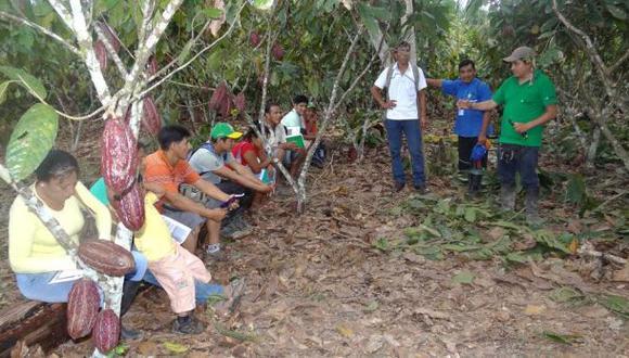 Vraem: reemplazaron 1,200 hectáreas de sembríos cocaleros