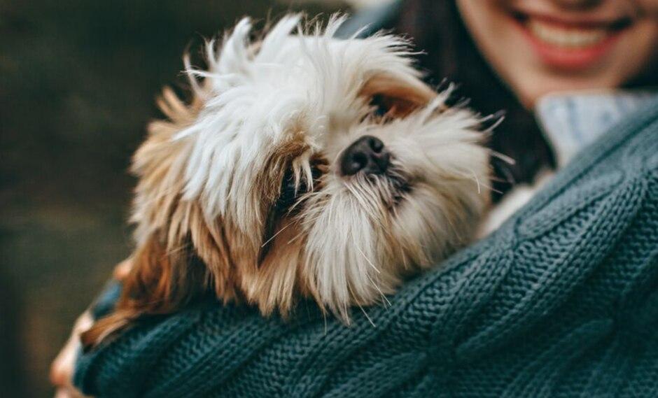Un perro y su curioso forma de comportarse como un bebé causa furor en las redes sociales. (Foto: Pixabay/Referencial)