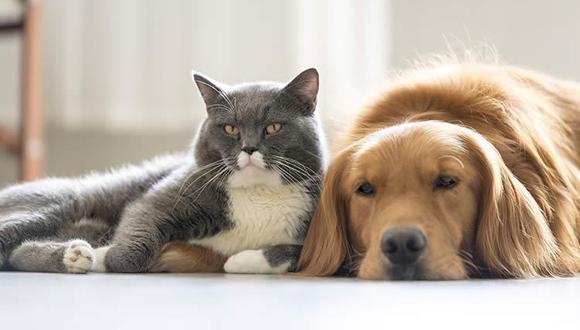 Los animales de compañía requieren hacerse un chequeo de salud de forma regular para así determinar si se encuentran bien (Foto: freepik)