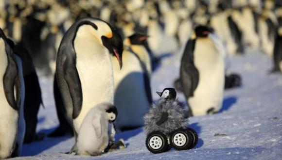 Polluelo robot logra engañar a pingüinos reales en la Antártida