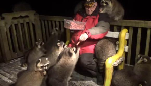 El hombre alimenta todas las noches a estos mapaches, pues su esposa, en su lecho de muerte, le pidió cuidara de los simpáticos mamíferos.  Foto: James Blackwood - Raccoon Whisperer